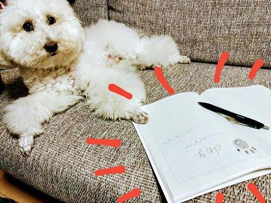ソファに白い犬 横にノートとペン