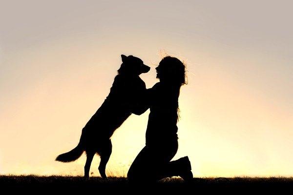 人に飛びついている犬のシルエット