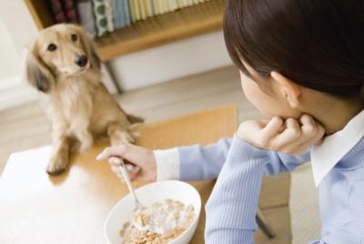 食事中の女性を見つめるダックスフンド