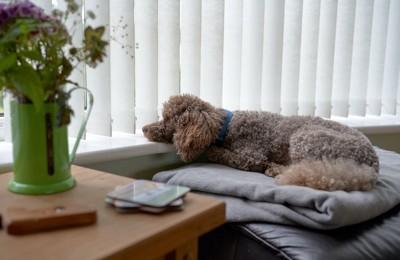 窓辺でくつろぎながら外を見る犬