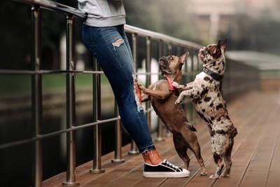 女性の足に前足を置く犬2匹