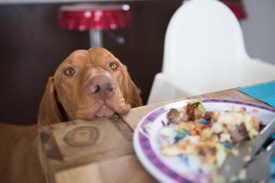 テーブルの上の食べ物を欲しがる犬