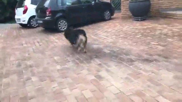 後ろ姿の犬