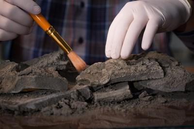 サンプルを扱う考古学者
