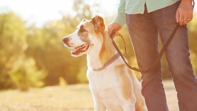 犬と男性お散歩
