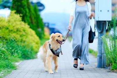 散歩するゴールデンレトリーバーと女性