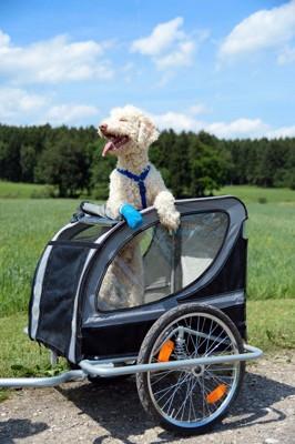 サイクリングを楽しむ犬
