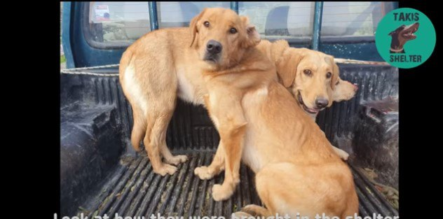 トラックの荷台に乗った犬たち