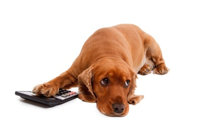 計算機と犬