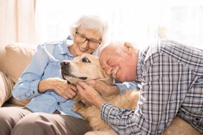 仲直りする人と犬