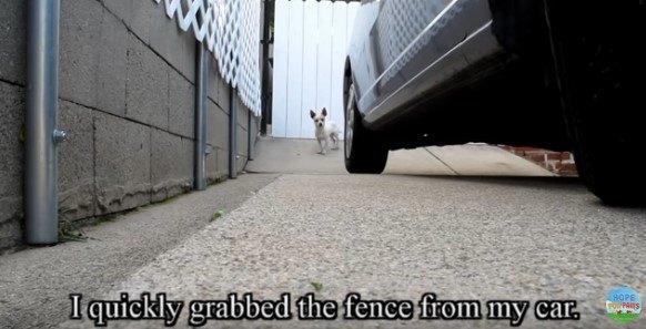 じっと見つめる犬