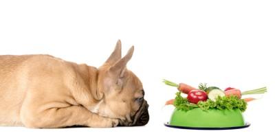 野菜がのったお皿を見つめる犬