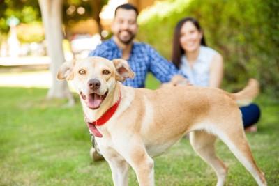 笑顔の犬と飼い主
