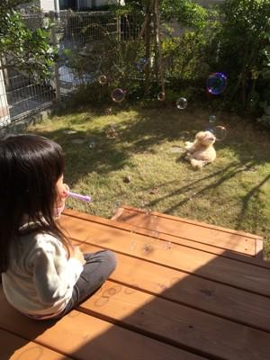 子どもと犬が庭でくつろぐ写真