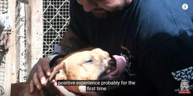 ケージから出されて喜ぶ犬