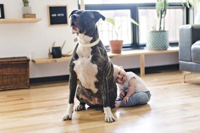 赤ちゃんの前に座る大型犬