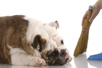 犬の横で掃除している飼い主