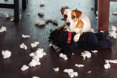 ボロボロになったヌイグルミと犬