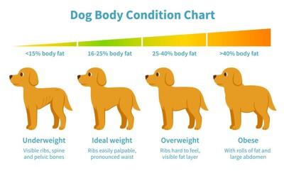 犬の肥満表
