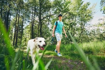 草が多い場所を散歩する飼い主と犬