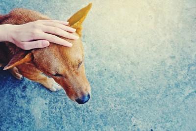 撫でられる犬と手