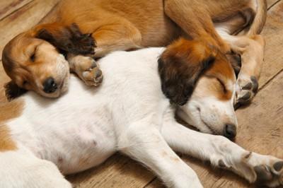 眠る犬たち