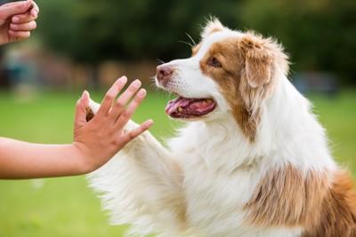 挨拶する女性と犬
