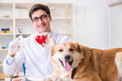 ハートの模型を持った獣医師と犬