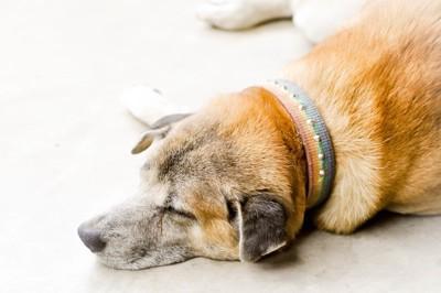 眠っている首輪を付けた犬