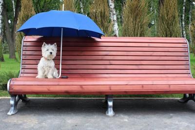 傘をさしてベンチに座る犬