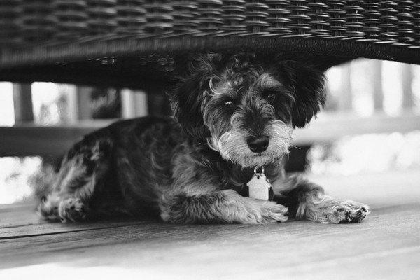 黒白画像で椅子の下で寝そべるヨープー