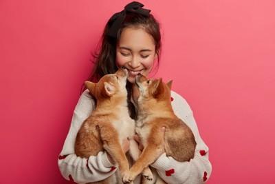 女性と二頭の柴犬の子犬
