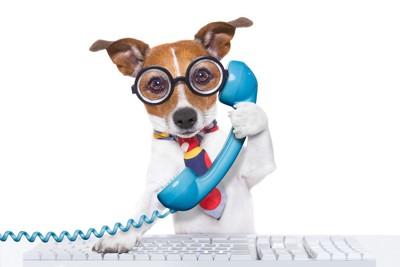 電話する犬