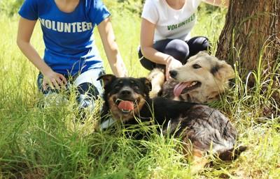 散歩中に休憩する2匹の保護犬と2人のボランティア