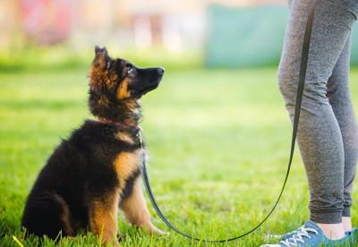 飼い主の前に座って指示を待つ犬