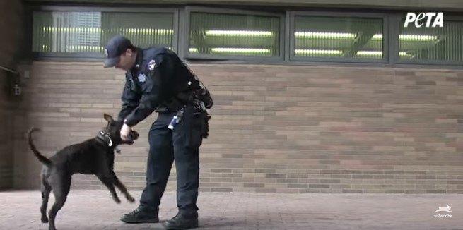 遊ぶ犬と警察官