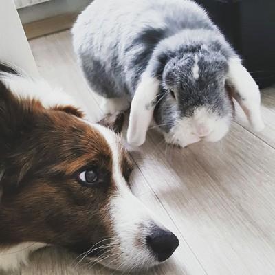 寝転がる犬とウサギ