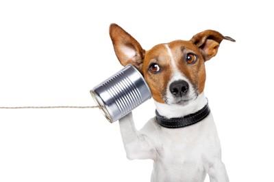 糸電話する犬