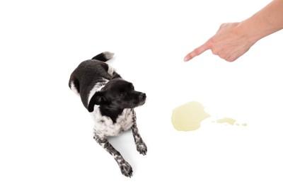 粗相をしてしまった犬を叱る人の手