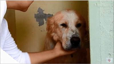 保護された犬
