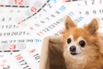 カレンダーと犬