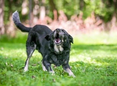 興奮した様子で遊ぶ犬