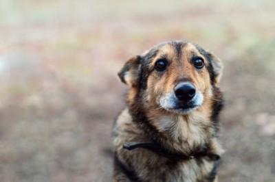 耳を後ろに倒して悲しげな表情の犬