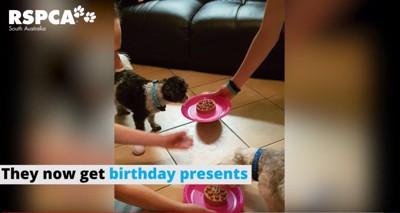 犬用ケーキを食べる2匹の犬