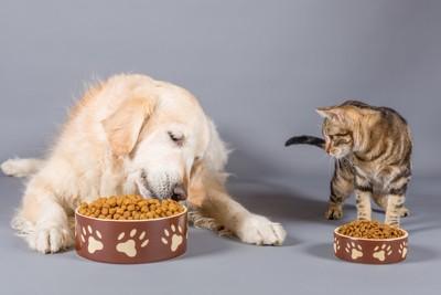 ドライフードを前にした犬と猫