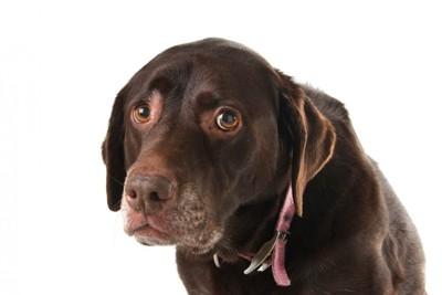 怯えるような表情の犬