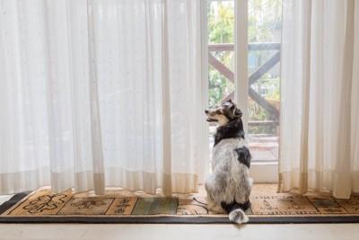 窓の前に笑顔で座っている犬