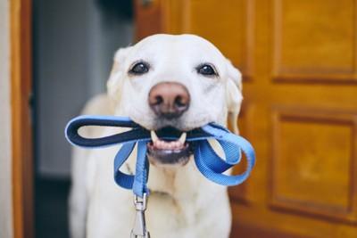 玄関でリードをくわえる犬