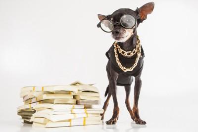 メガネをかけて立ちすくむ犬とお札の山