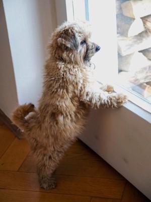 ドアに手を置き立っている犬